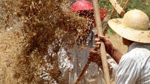 la danza dei cereali: giornata dedicata alla raccolta nei complessi masserizi salentini più belli-3
