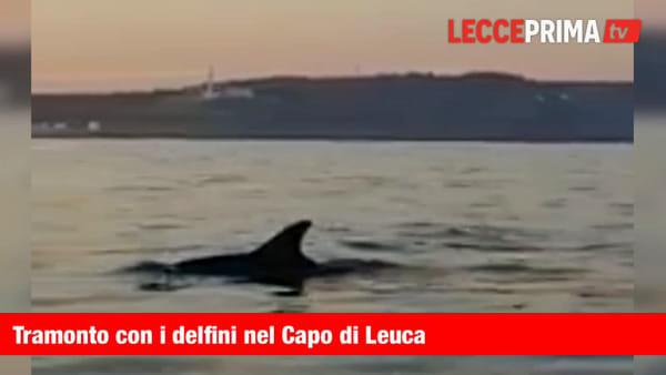 Al tramonto con i delfini nel Capo di Leuca: il video dalla barca