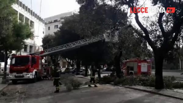 Video | Via Garibaldi, dopo lo scontro sull'albero tagliati i rami pericolanti