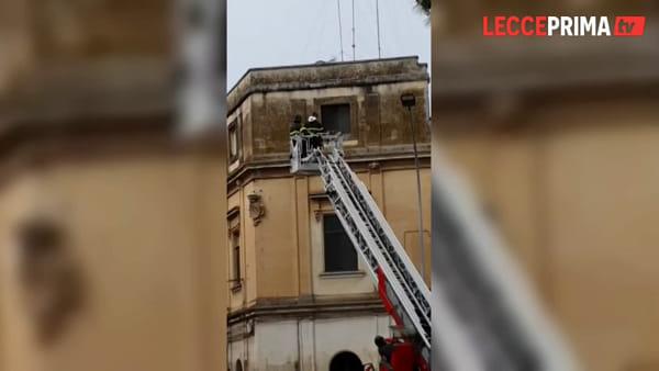 Video | Pompieri inerpicati per salvarlo: il gattino si lancia, vivo per miracolo