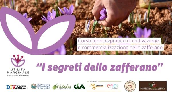 """""""I segreti dello zafferano"""": il corso per coltivarlo"""