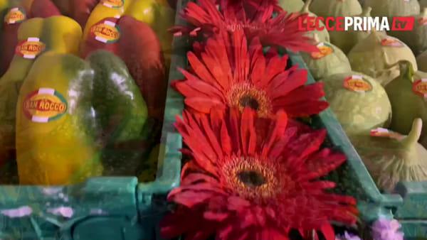Video | I floricoltori trasformano Leverano in un grande e colorato giardino