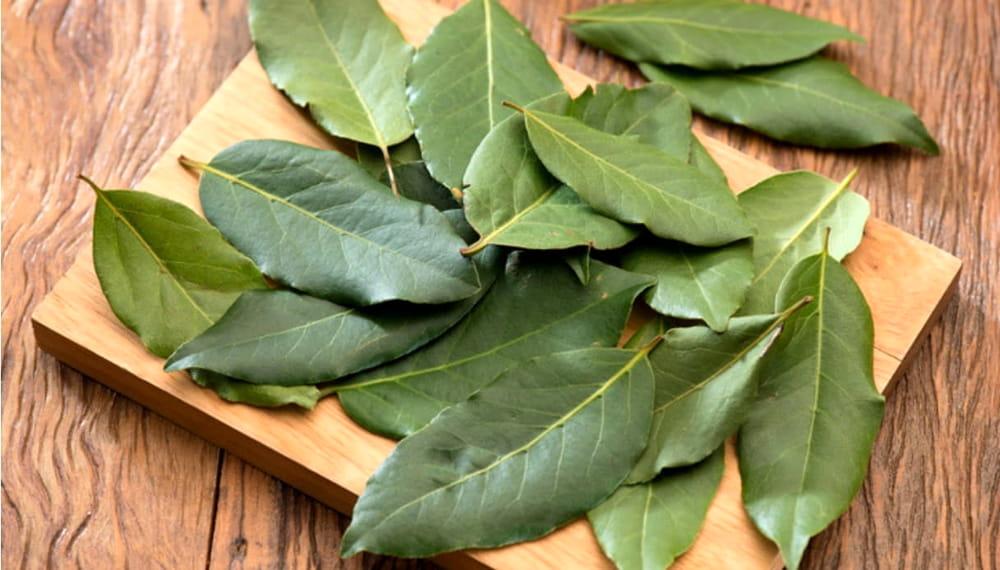 Scopriamo i benefici delle foglie di alloro, pianta sacra dei Greci e Romani